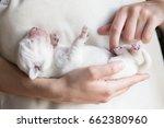 newborn puppy of a golden... | Shutterstock . vector #662380960