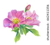 Rose Hip.greeting Card With...