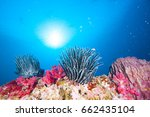 feather stars | Shutterstock . vector #662435104