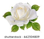 Stock photo rose isolated on white background 662504809