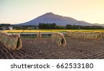japan style harvested on... | Shutterstock . vector #662533180