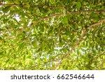 tree in the garden | Shutterstock . vector #662546644