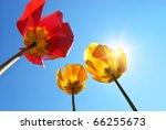 Tulips On Sky Background....