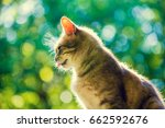 Stock photo portrait of cute cat sitting outdoor against green natural background bottom view 662592676