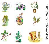 a set of plants. colorful... | Shutterstock . vector #662592688