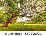 big tree in public park. | Shutterstock . vector #662618020