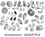 nuts collection illustration ... | Shutterstock .eps vector #662637916