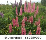 beautiful colorful blooming... | Shutterstock . vector #662659030