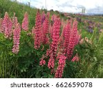 beautiful colorful blooming... | Shutterstock . vector #662659078