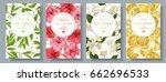 vector popular tea flovour... | Shutterstock .eps vector #662696533