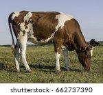 calf | Shutterstock . vector #662737390