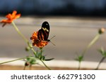 Butterfly Tiger In The Cosmos...