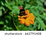 Tiger Butterfly On The Flower...