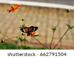 Tiger Butterfly In Bloom In Th...