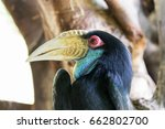 closeup horn bill head  the... | Shutterstock . vector #662802700