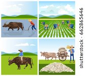 farmers work in rice fields.... | Shutterstock .eps vector #662865646
