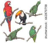 hand drawn birds set. parrots... | Shutterstock .eps vector #662870758