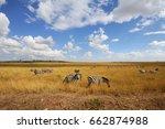 zebra on grassland in africa ... | Shutterstock . vector #662874988
