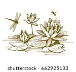 Flowers Of Water Lilies And...