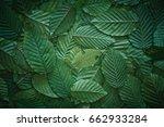 creative layout made of hophorn ... | Shutterstock . vector #662933284