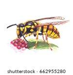 wasp eating raspberry.... | Shutterstock . vector #662955280