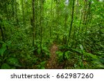 inside of the amazonian jungle  ...   Shutterstock . vector #662987260