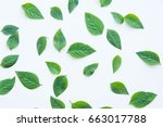 green leaf of plant on white... | Shutterstock . vector #663017788