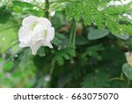 white wild flawer and fresh... | Shutterstock . vector #663075070