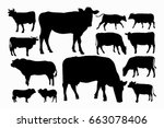 set male and female cow... | Shutterstock .eps vector #663078406