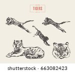 Collection Of Realistic Tigers  ...