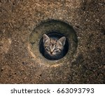 Stock photo small cat in a hole 663093793