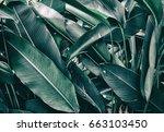 tropical foliage  dark green... | Shutterstock . vector #663103450
