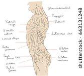 hand drawn illustration of the... | Shutterstock .eps vector #663131248