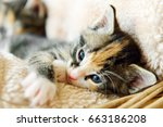 young adorable kitten  in a... | Shutterstock . vector #663186208