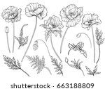 Poppy Flowers. Set Of Outline...