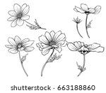 cosmos flowers. set of outline... | Shutterstock .eps vector #663188860