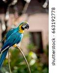 colourful parrots bird sitting... | Shutterstock . vector #663192778
