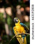 colourful parrots bird sitting... | Shutterstock . vector #663192808