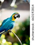 colourful parrots bird sitting... | Shutterstock . vector #663192814