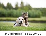 Stock photo cat and dog friendship 663219430