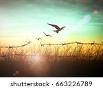 Stock photo international human rights day concept silhouette of bird flying and barbed wire at autumn sunset 663226789