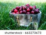 cherry basket. cherry tree... | Shutterstock . vector #663273673