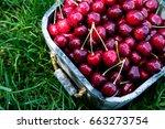 cherry basket. cherry tree...   Shutterstock . vector #663273754