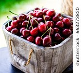 cherry basket. cherry tree... | Shutterstock . vector #663273820