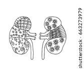 human kidney zentangle | Shutterstock .eps vector #663273979