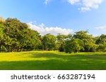 green trees in beautiful park... | Shutterstock . vector #663287194