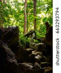 view of the dense forest from...   Shutterstock . vector #663293794