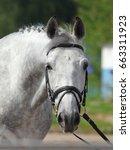lusitano horse portrait in...   Shutterstock . vector #663311923