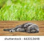 Stock photo cat 663313648