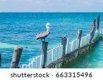 Pelican At Sea